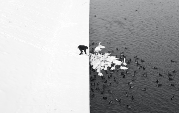 Marcin Ryczek: A Man Feeding Swans in the Snow