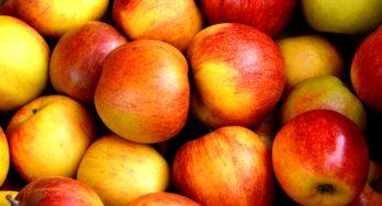 Niemand wil de Poolse appels hebben (en het zijn er nogal veel)