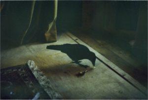 Expositie bij Fotoboek - Reveal |Odsłonić @ galerie Singular-Art